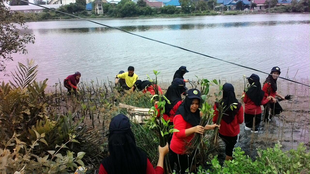Mangrove 2