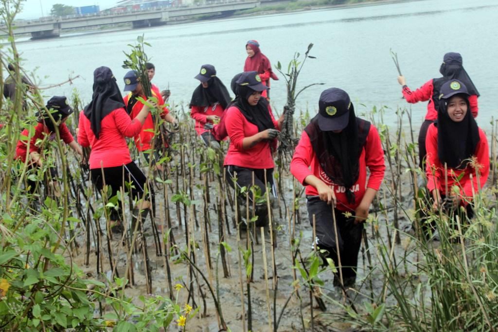 mangrove 4